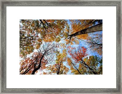 Treetops Framed Print by Elena Elisseeva