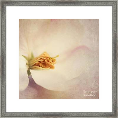 Tresfonds Heart Of A White Blossom Framed Print by Priska Wettstein