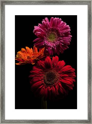 Trio Framed Print by Ron Smith