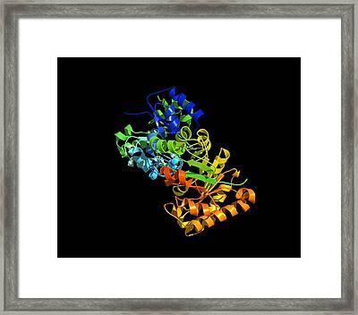 Triose Phosphate Isomerase Molecule Framed Print by Dr Tim Evans