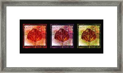 Triptych Leaves  Framed Print by Ann Powell
