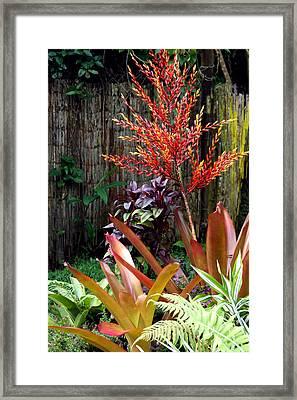 Tropical Garden Framed Print by Karon Melillo DeVega