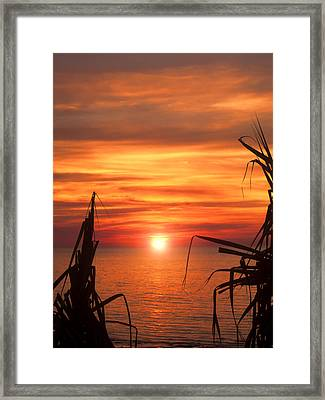 Tropical Sunset V6  Framed Print by Douglas Barnard