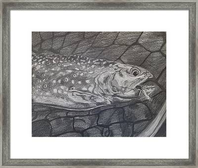 Trout In Net Framed Print by Michelle Grove