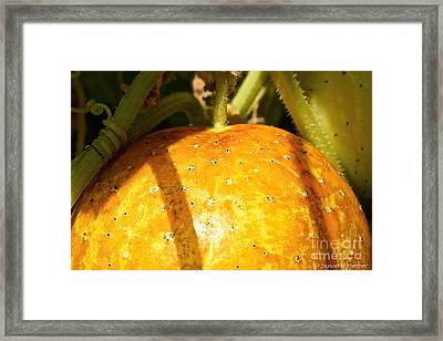 True Lemon Cucumber Framed Print by Susan Herber