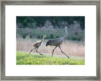 Trying To Keep Up Framed Print by Carol Groenen