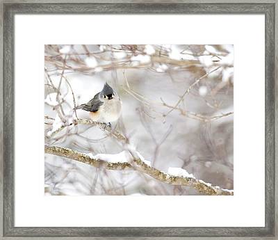 Tufted Titmouse In Snow Framed Print by Rob Travis