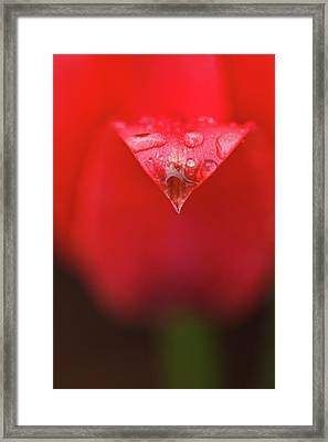 Tulip Abstract Framed Print by Laszlo Podor Photography