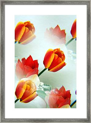 Tulip Abstract Framed Print by Marilyn Hunt