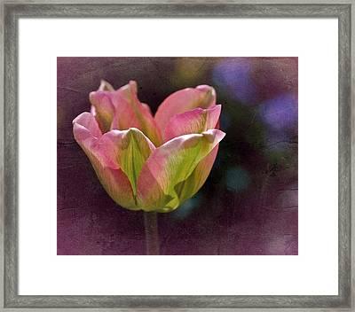 Tulipicity Framed Print by Richard Cummings