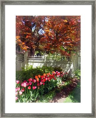 Tulips By Dappled Fence Framed Print by Susan Savad