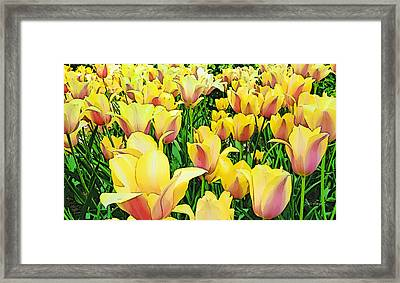 Tulips In New York  Framed Print by Russ Harris