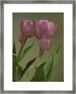 Tulips Reflections Framed Print by Debra     Vatalaro