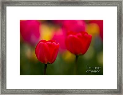 Tulips Framed Print by Thomas Splietker