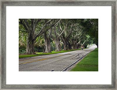 Tunnel Of Trees Framed Print by Robert Smith