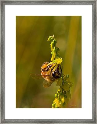 Tupelo Honey Framed Print by Mitch Shindelbower