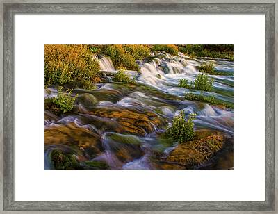 Turbulant Bloom Framed Print by Joshua Dwyer