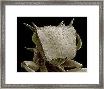 Turtle Ant's Head, Sem Framed Print by Steve Gschmeissner
