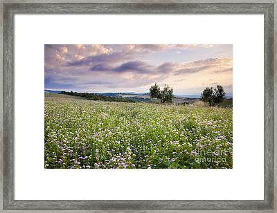 Tuscany Flowers Framed Print by Brian Jannsen