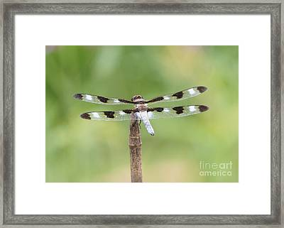 Twelve-spotted Skipper Framed Print by Robert E Alter Reflections of Infinity