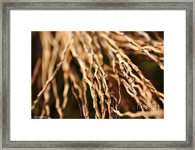 Twigs Framed Print by Cheryl Young