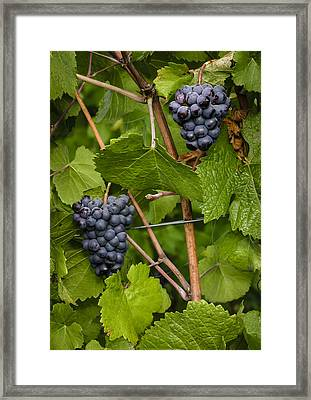 Twins Framed Print by Jean Noren