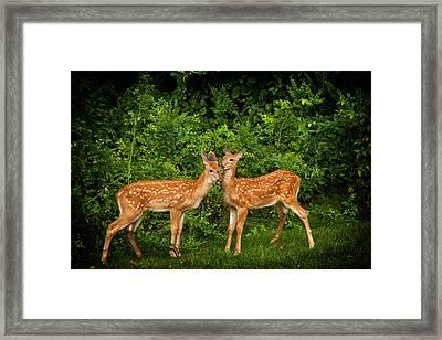 Twins Framed Print by Karol Livote