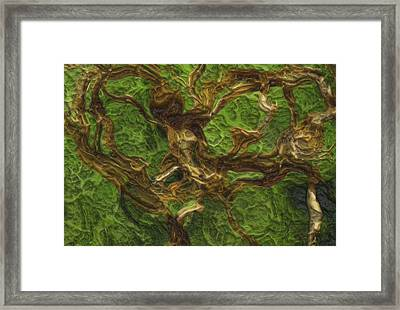 Twisted Framed Print by Jack Zulli