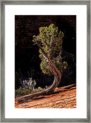 Twisted Reach Framed Print by Christopher Holmes