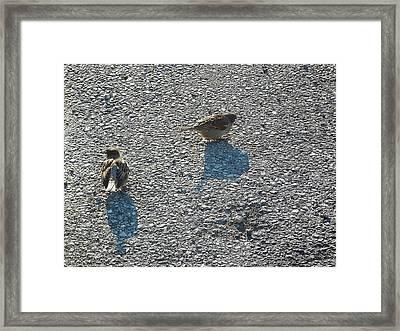 Two Birds Framed Print by Anne Cameron Cutri