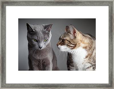 Two Cats Framed Print by Nailia Schwarz