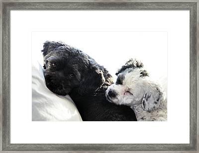 Two Cute Framed Print by Larry Ricker