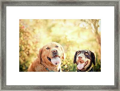 Two Dogs Framed Print by Jessica Trinh