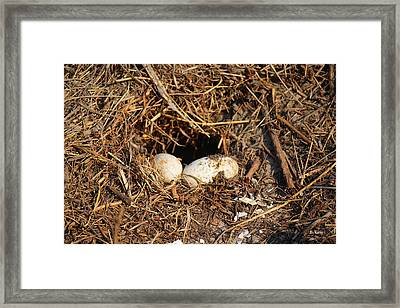Two Eggs They Did Not Take Framed Print by Roena King