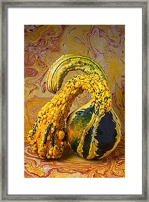 Two Gourds Framed Print by Garry Gay