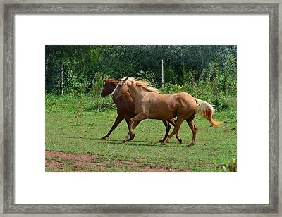 Two Horses In Unison  - 7221d Framed Print by Paul Lyndon Phillips