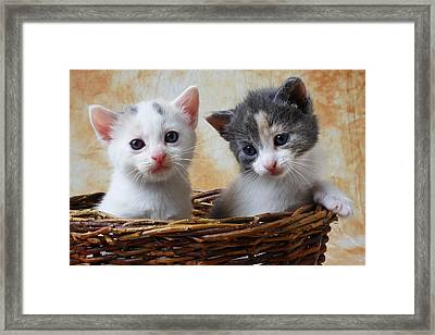 Two Kittens In Basket Framed Print by Garry Gay