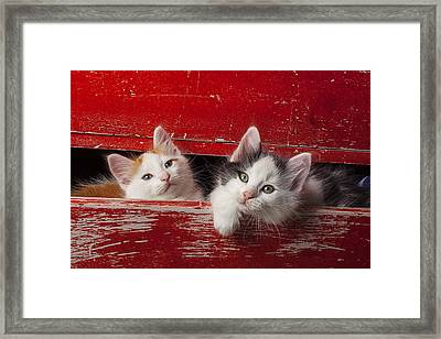 Two Kittens In Red Drawer Framed Print by Garry Gay