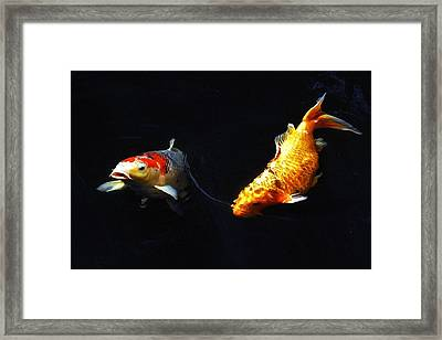 Two Koi Framed Print by Don Mann