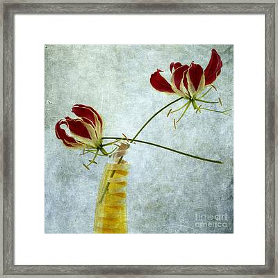 Two Gloriosa Lily. Framed Print by Bernard Jaubert