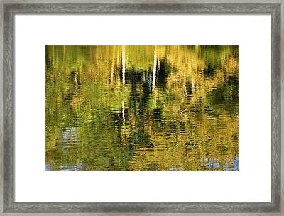 Two Palms Reflected In Water Framed Print by Rich Franco