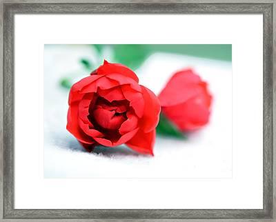 Two Rose Buds Framed Print by Susan Leggett