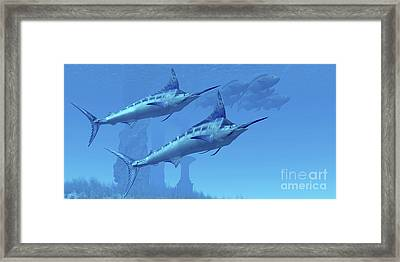 Two Sleek Blue Marlins Swim Close Framed Print by Corey Ford