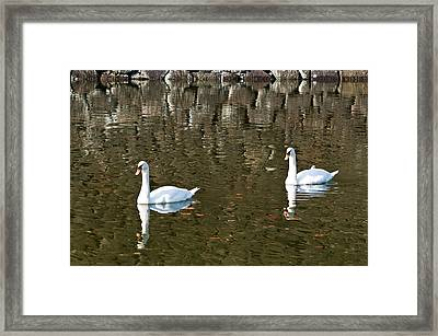 Two Swan Floating On A Pond  Framed Print by Ulrich Schade