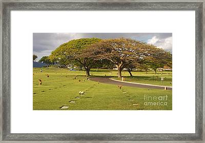 Two Trees Framed Print by Silvie Kendall