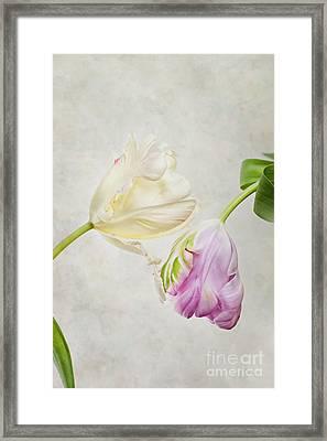 Two Tulips Framed Print by Nailia Schwarz