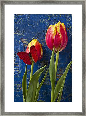 Two Tulips With Red Butterfly Framed Print by Garry Gay
