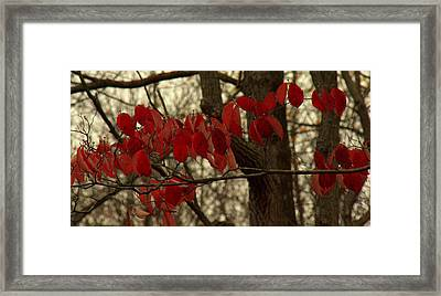 Ultimos Dias Framed Print by Ed Smith