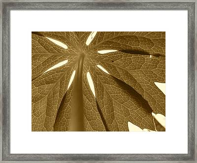 Umbrella In Sepia Framed Print by JD Grimes