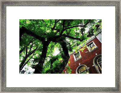 Under Cover Framed Print by Cathie Tyler